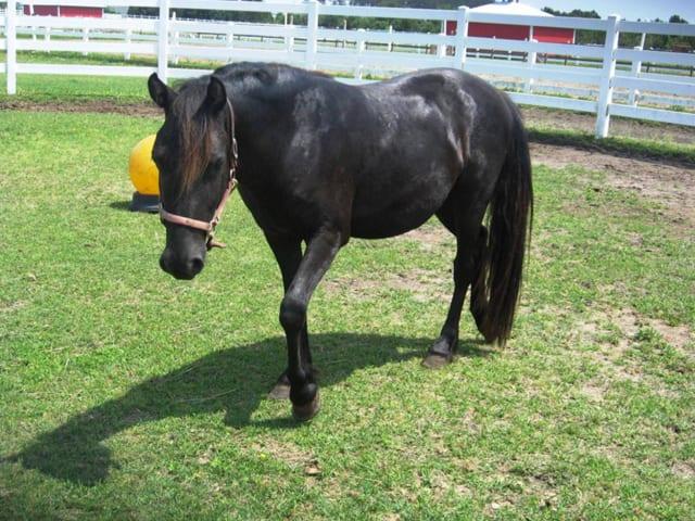 adoption corolla wild horses corolla wild horse fund. Black Bedroom Furniture Sets. Home Design Ideas