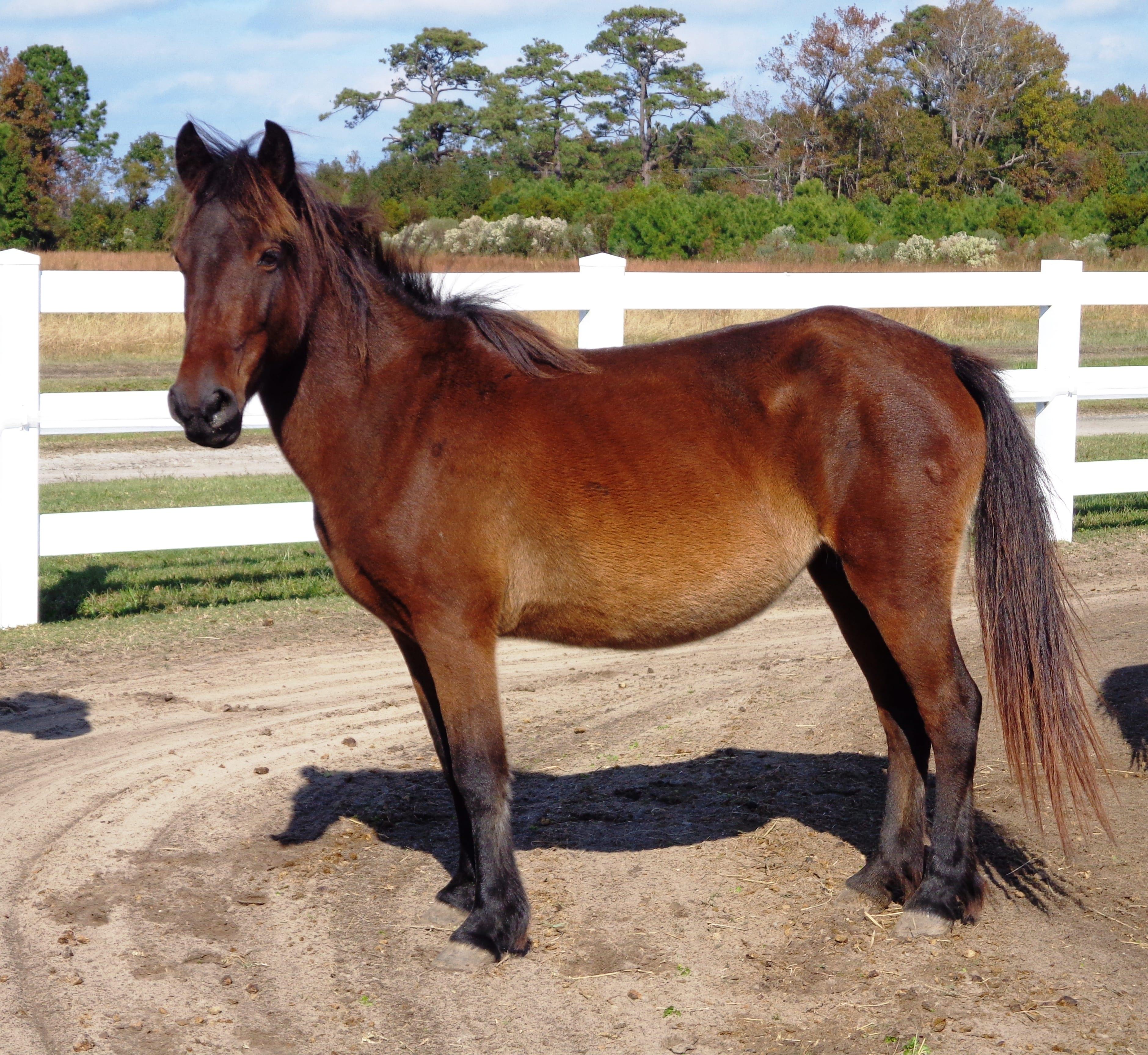 Horse: Corolla Wild Horse Fund