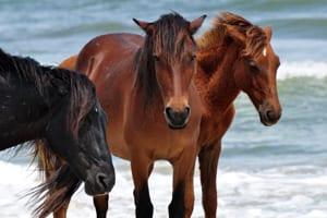 1_January_Cathy_Harrison--Virginia_Beach_VA